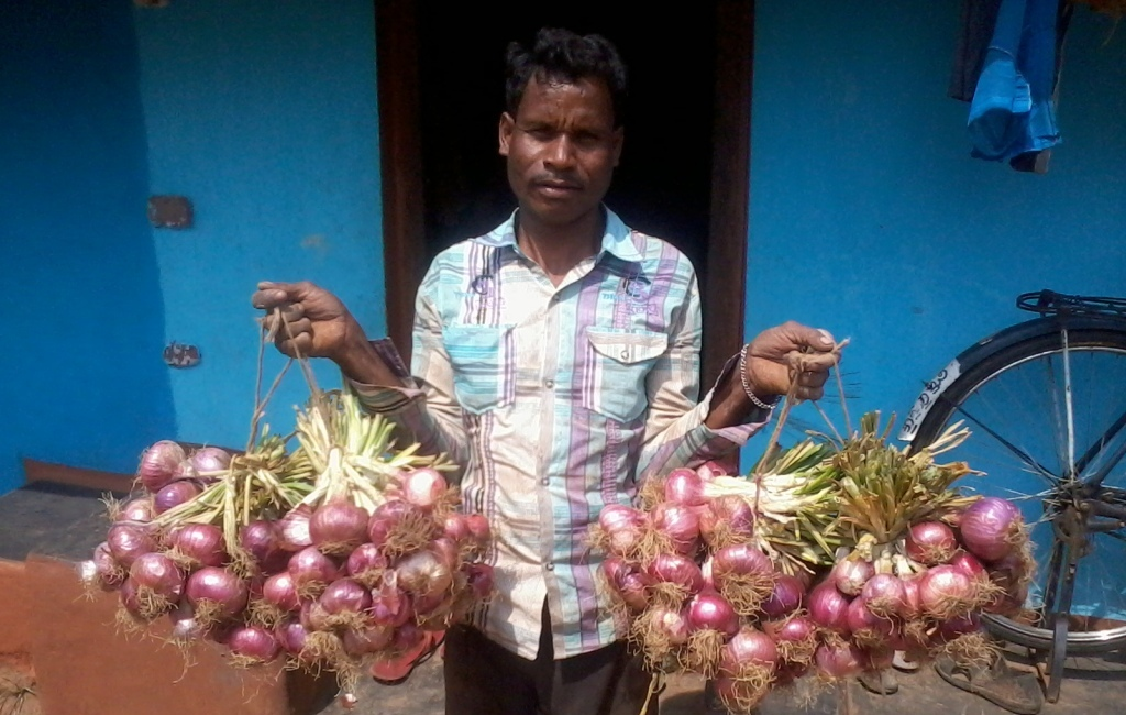 ONION CULTIVATION AT PADAGALAMA VILL. UNDER OTELP