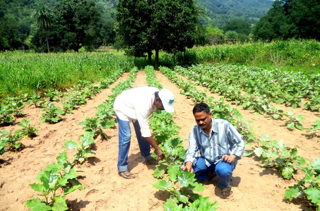 VEG CULTIVATION IN OTELP VILL.