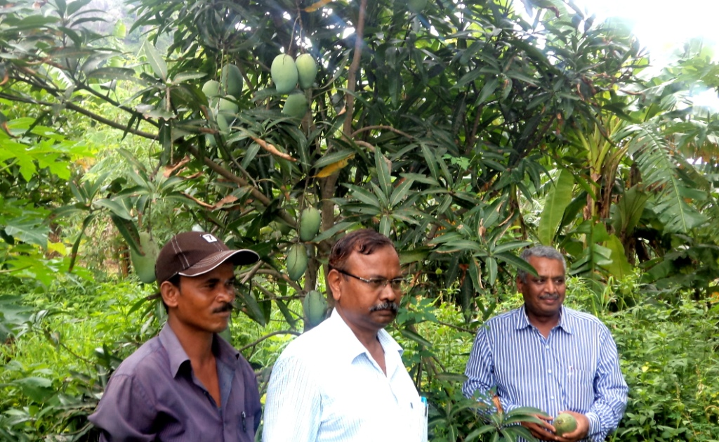 WADI FIELD VISIT BY DGM & AGM OF NABARD
