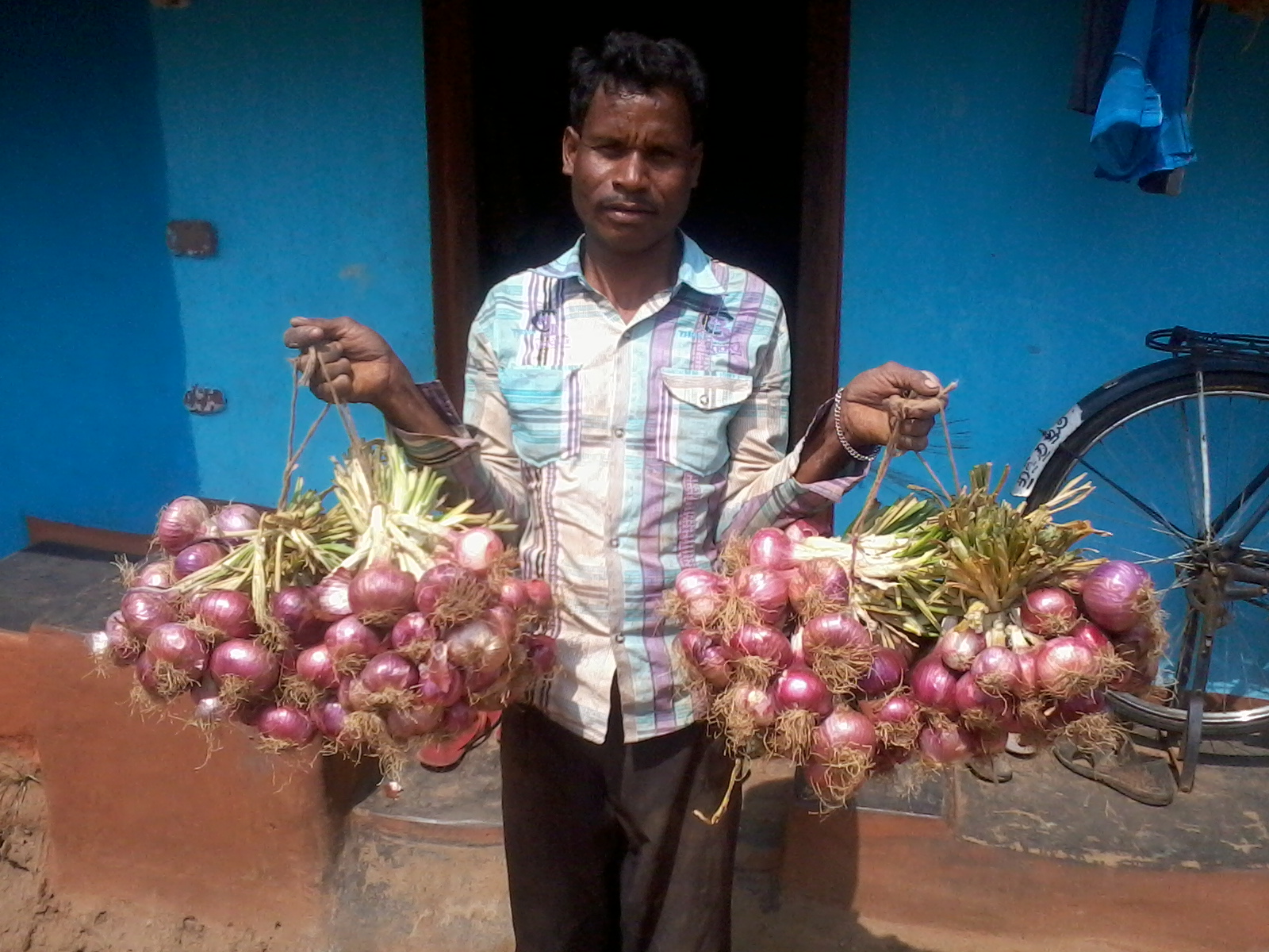 Onion Cultivation at Padagalama
